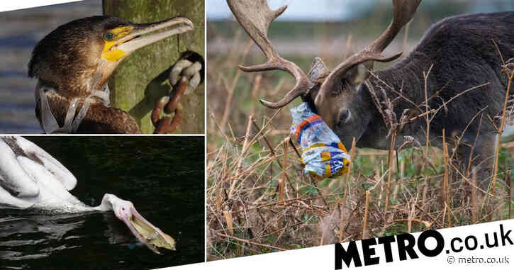 Harrowing wildlife images reveal true cost of London's plastic pollution