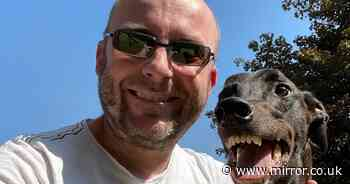 Love at first sight! Grinning greyhound's cheesy smile won over heart of new owner