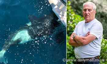 British yachtsman relives terrifying moment orcas attacked in bid to capsize boat and eat him