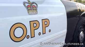 Trailer full of piglets spills onto roadway near North Bay - CTV Toronto