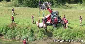 Horse stuck in canal hoisted out of water by firefighters in dramatic rescue