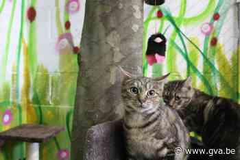 't Kattenhuisje vangt structurele steun (Duffel) - Gazet van Antwerpen