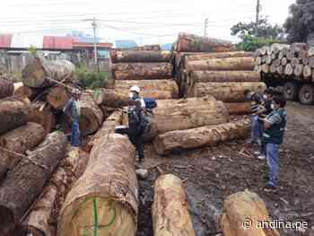 Junín: incautan en Satipo madera de origen ilegal valorizada en más de S/ 39000 - Agencia Andina