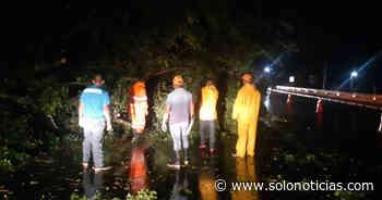 Al menos 19 árboles cayeron anoche en carretera a Tecoluca, San Vicente - Solo Noticias