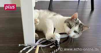 Vermisster Kater Loki nach zwei Jahren wiedergefunden - Echo Online