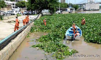 Brigadas limpian río Ozama de lilas arrastradas - Periódico El Caribe - El Caribe