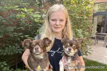 """Jonge chihuahua's van Esmera (19) overleven vergiftiging: """"M... (Ieper) - Het Nieuwsblad"""
