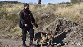 Búsqueda de Guadalupe: una perra marcó una casa y una posible mancha de sangre - Télam