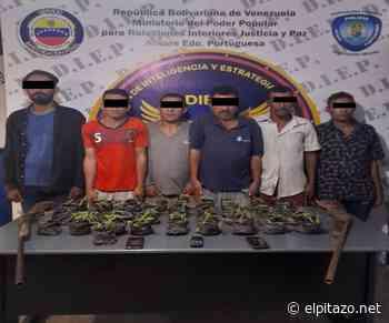 Portuguesa   Policía desmantela pequeño vivero de marihuana en zona alta de Araure - El Pitazo