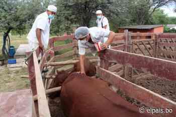 Entregan autorización sanitaria para construcción de matadero en Villamontes - El País