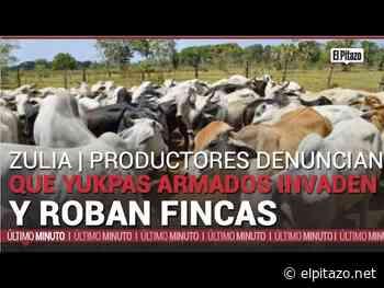 Productores denuncian que yukpas armados invadieron y robaron dos fincas en Machiques - El Pitazo