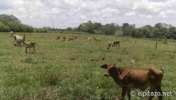 Zulia | Yukpas armados invaden segunda finca en Machiques en una semana - El Pitazo