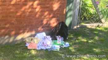 La beba abandonada en Villa Buide fue llamada Rosario y se busca a quienes la dejaron en la calle - Pilar a Diario