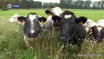 Loepzuivere hattrick voor Linter: Hoevevlees Van het Lindeveld is Korte Keten Kop 2021 - ROB-tv