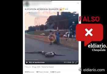 ¿Video de una anaconda en una carretera fue grabado en la autopista Acarigua-Guanare? - El Diario