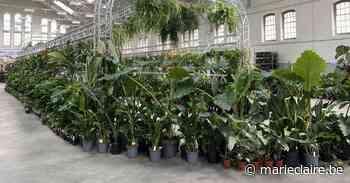 Meer dan 10.000 planten op nieuwe editie van PUP in Elsene - Marie Claire - Marieclaire
