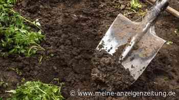 Spaten: So finden Sie das für sich passende Modell für die Gartenarbeit