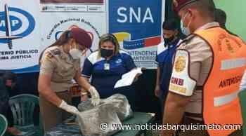 Más de 400 kilos de Marihuana fueron incinerados en Cabudare - Noticias Barquisimeto