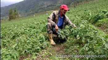 Fedeagro aboga por créditos para productores merideños afectados - Las Noticias de Cojedes
