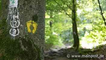 Ausflugstipp Miltenberg: Bei einer Wanderung erst auf die Burg, dann in den Wald - Main-Post
