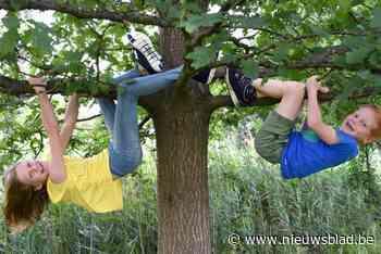 Vier gemeentes bestellen 1001 gratis bomen