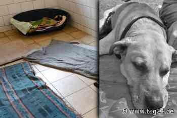 """Trauriger Abschied von Tierheim-Hund Rocky in Delitzsch: """"Nun ist dein Zimmer leer!"""" - TAG24"""