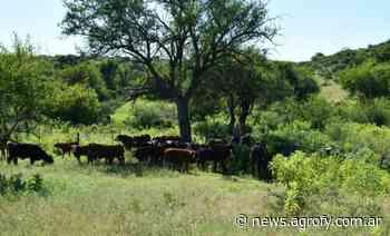 Lechería: aseguran que el verano podría generar un costo adicional de 26 dólares por vaca - Agrofy News