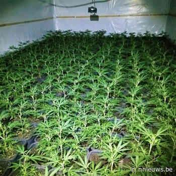 Politiezone Geel-Laakdal-Meerhout rolt cannabisplantage van 900 planten op aan Pas centrum Geel - Nnieuws.be