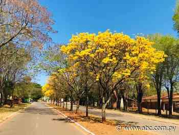 Avenida de Nueva Italia se tiñe de amarillo - ABC Color