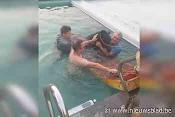 """Burgemeester vindt 's morgens pony in zijn zwembad: """"Ik ben direct in het water gesprongen om het uitgeputte dier te ondersteunen"""""""