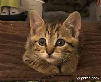 East Brunswick Area Pets Newly Up For Adoption: Meet Remy, Zaria, Zuri & More - East Brunswick, NJ Patch