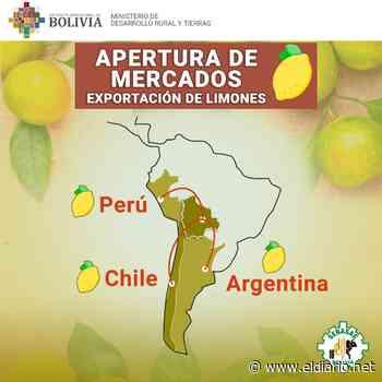 Senasag realiza acciones para viabilizar exportación de limón - El Diario (Bolivia)