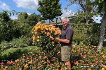 Luc stelt tuin met 7.000 rozen open voor bezoekers - Het Belang van Limburg