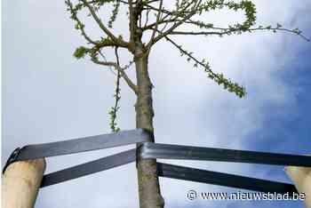 Iedereen mag helpen om tweeduizend bomen te planten - Het Nieuwsblad