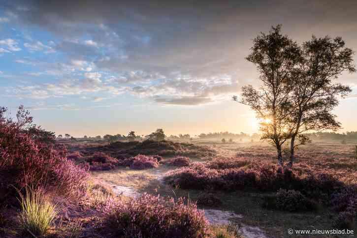Kalmthoutse Heide wil Nationaal Park worden, maar buurgemeenten zijn daar niet blij mee