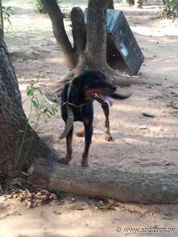 Una beba murió tras ser atacada por un perro en Ybycuí - ABC Color