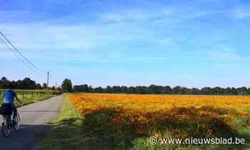 De kleurrijkste straat van Limburg ligt in Kinrooi - Het Nieuwsblad