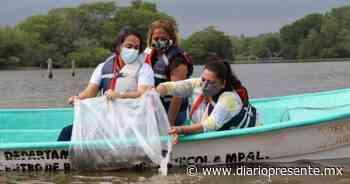 """Realizan otra repoblación de lagunas en Comalcalco con especies nativas de mojarras """"castarrica"""" y """"paleta"""" - Diario Presente"""