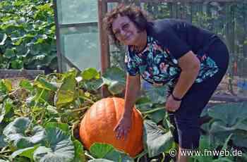 Boxtalerin züchtet riesige Kürbisse im Garten – ganz ohne Dünger - Fränkische Nachrichten