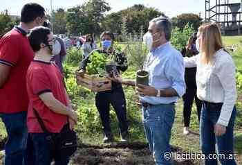 Plantarán 1.000 árboles en espacios verdes y barrios de la ciudad - La Crítica