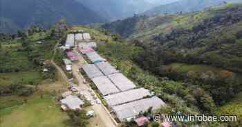 Tensión entre partido Comunes y ARN por viviendas de reincorporados en Dabeiba, Antioquia - infobae