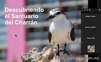 """Promueven en Isla Mujeres la preservación de las aves conocidas como """"Charranes"""" - Noticaribe"""