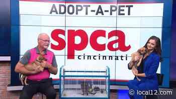 Adopt-a-Pet: Ren, Stimpy, and Jane are Hurricane Ida survivors, and need forever homes! - WKRC TV Cincinnati