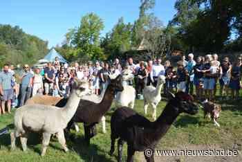 Alexander De Croo doopt alpaca's