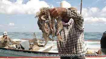 SADER levanta veda para pesca de camarón en el océano Pacífico - Ciudadania Express