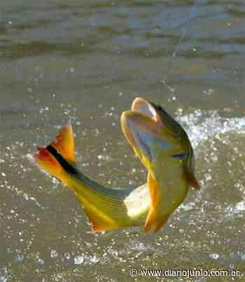 El lunes comienza la veda para la pesca del Dorado - Diario Junio