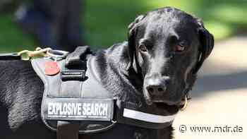 Polizei gibt Entwarnung für Delitzsch - doch kein Sprengstoff in Wohnungen | MDR.DE - MDR