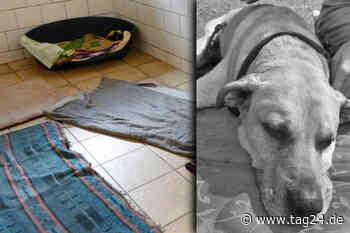 """Trauriger Abschied von Tierheim-Hund Rocky: """"Nun ist dein Zimmer leer!"""" - TAG24"""