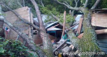TREMENDO SUSTO / Árbol cae sobre vivienda en Altagracia de Orituco - El Tubazo Digital