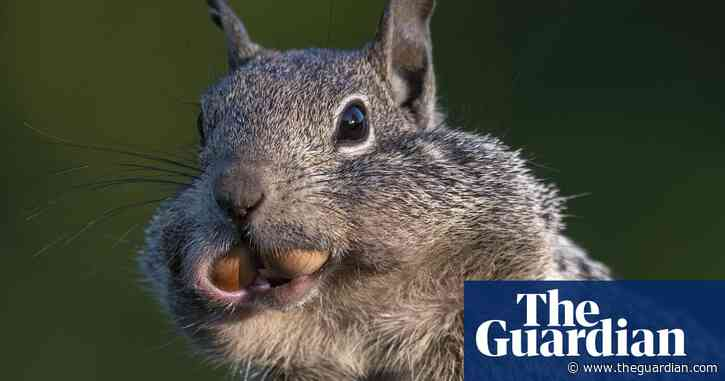 Squirrels have human-like personality traits, says study